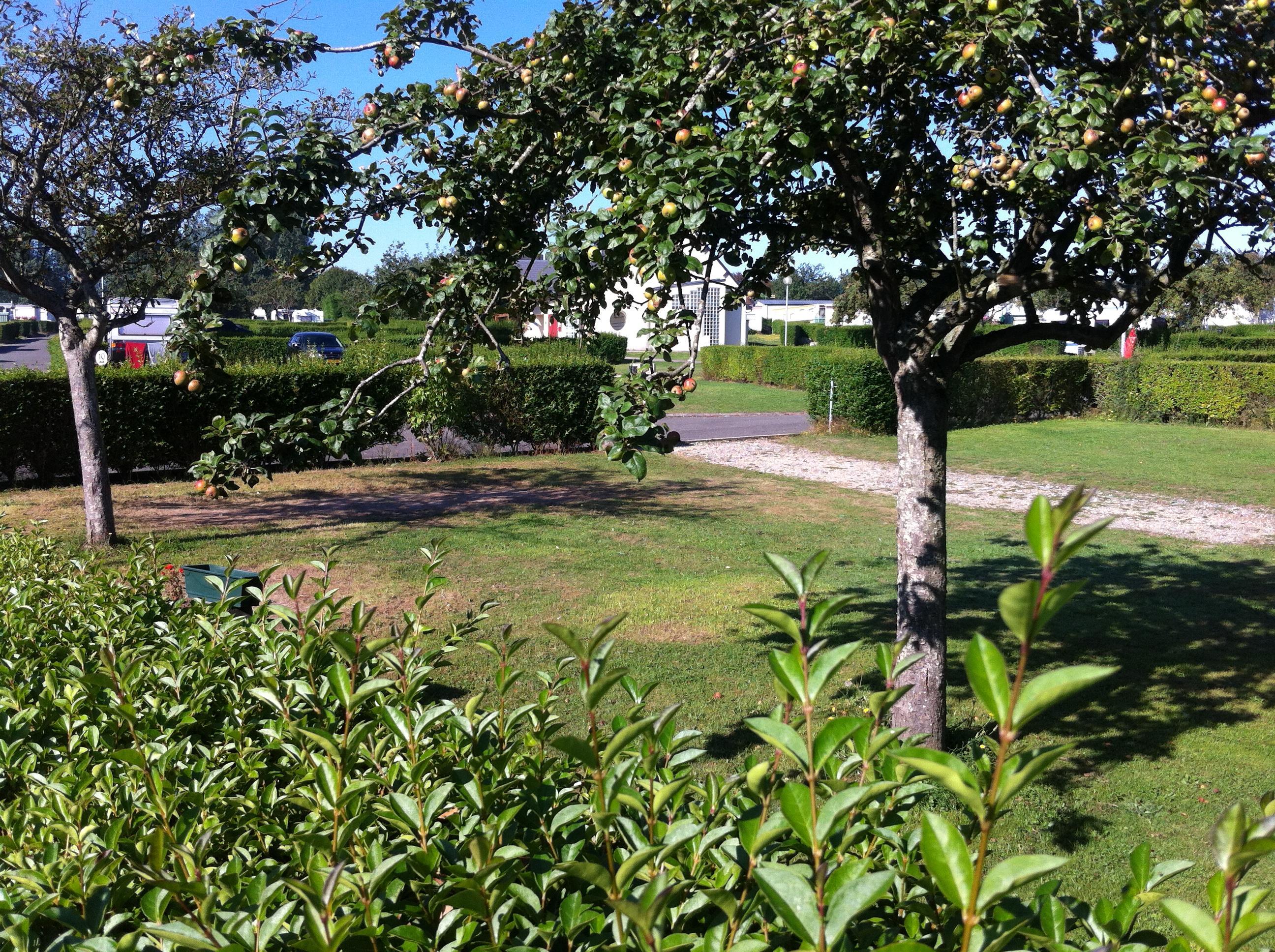 Location camping etennemare location vacances saint for Camping saint valery en caux avec piscine